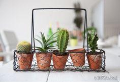 Interior Junkie HQ @ #workmode   #botanical #office #interior #interiordesign #home #homedecoration #living #green #industrial #amsterdam #lemonade #green #cactus