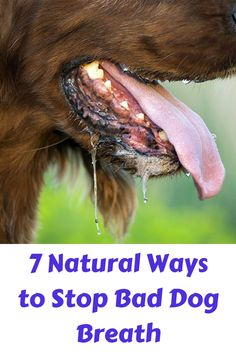 7 Natural Ways to Stop Bad Dog Breath. If you're living with a dog that can singe your bangs with his/her dragon breath, then these steps may. Types Of Bones, Bad Dog Breath, Neck Bones, Bully Sticks, Stomach Problems, Fish Stock, Raw Food Diet, Teeth Cleaning, Breathe
