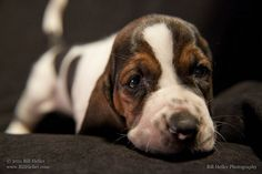 Curious Puppy by Santa Barbara Photographer Bill Heller, via Flickr