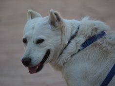 Blanquita, our lovely shelter dog