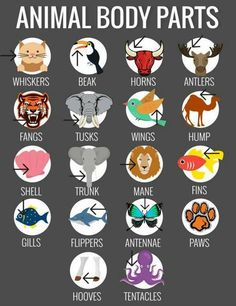 English Vocabulary: Animal Body Parts English Vocabulary Words, Learn English Words, English Phrases, English Study, English Grammar, English Writing Skills, English Lessons, English Language Learning, Teaching English