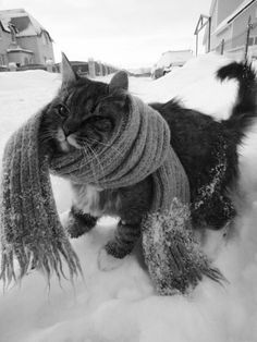 Don't forget to muffle your catties in this cold weather!  LOL