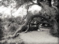 Santa Barbara botanical gardens.