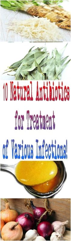 10 Natural Antibiotics for Treatment of Various Infections! – Stay Positive Be Healthy