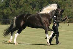 Black horse, white mane. Rare and beautiful