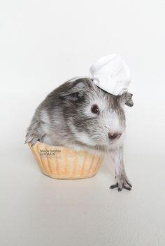 My baby guinea pig Cupcake... as a cupcake ! By Marie-Sophie Germain - www.mariesophiegermain.com