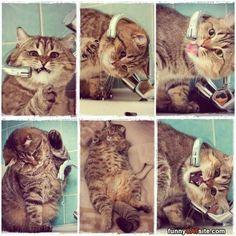 This Is Soooo Gooood - funnycatsite.com#cats #funny #cute