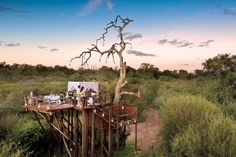 The Chalkley Treehouse at sunset - Sabi Sand Game Reserve, South Africa Best Places To Propose, Places To Go, Luxury Tree Houses, Sand Game, River Lodge, Bamboo House, Game Reserve, Africa Travel, My New Room