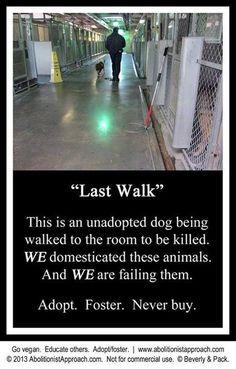 Adopt, foster, spay, neuter, donate, LOVE AN INNOCENT!