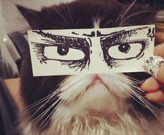 Kötü Kedi Şerafettin Bunları Kıskandı  #grafik #tasarım #manzara #kedi