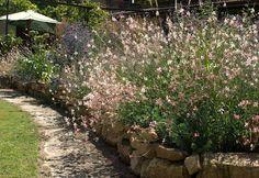 Il nostro giardino francese, in Dordogna bella: piena estate