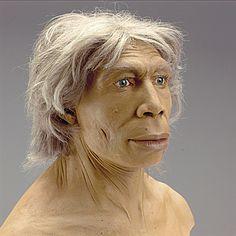 HOMO NEANDERTHALENSIS los esqueletos neandertales son robustos, con un tórax ancho y extremidades cortas. El cráneo se distingue por los arcos supraorbitarios prominentes, frente baja e inclinada, la ausencia de mentón y una capacidad craneal comparable o superior a la de los hombres modernos. Los estudios anatómicos y genéticos no han descartado que poseyeran la facultad del lenguaje hablado.