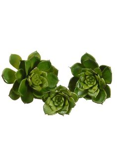 Faux succulents for creative DIY projects. Artificial succulents and air plants offer the realism with no maintenance required, find mini succulents to purple fake succulents and cactus. Artificial Plants And Trees, Artificial Succulents, Faux Succulents, Artificial Flowers, Prom Flowers, Fake Flowers, Dried Flowers, Silk Flowers, Wedding Flowers