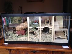 My gerbil cage is made with a turtle aquarium of wide and deep. My husband made these apartm… Hamster Tank, Hamster House, Hamster Diys, Ferret, Gerbil Toys, Gerbil Cages, Turtle Cage, Turtle Aquarium, Hamster Habitat