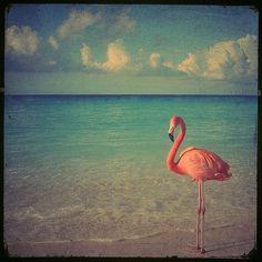 summer............♥♥