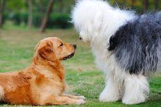 Gegenkonditionierung in der Hundeerziehung