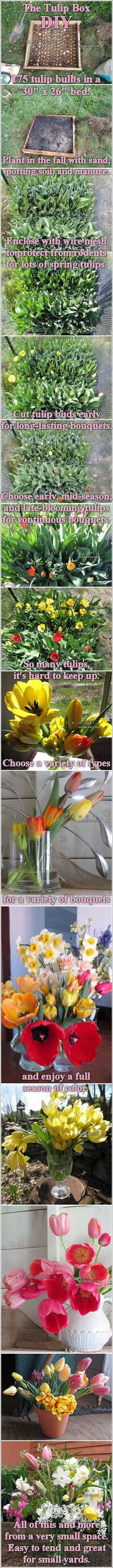 the tulip box DIY - how to get a lot of tulip bouquets from a very small garden space