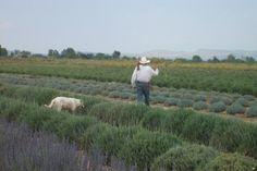 The Lavender Project - A Mexican Social Enterprise