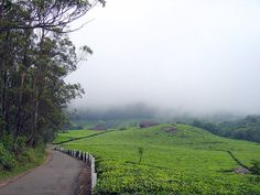 Munnar roads