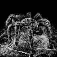 Tarantula | 5x5 scratchboard | Melissa Helene Fine Arts + Photography www.melissahelene.com #artwork #art #scratchboard #scratchart #wildlife #animalart #arachnid #tarantula #spider #blackandwhite #melissahelenefinearts Illustration Courses, Black Paper Drawing, Scratchboard Art, Spider Art, Scratch Art, Black And White Artwork, High School Art, Pen Art, Art Festival