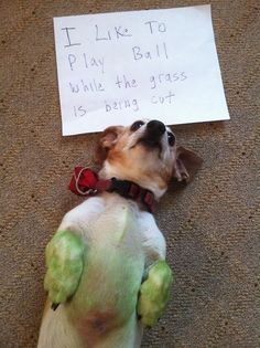I like to play ball while the grass is being cut from the Dog Shaming website...too hysterical!