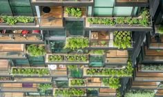 Cities That Steal Smart Ideas From Plants and Animals | Guardian Sustainable Business | The Guardian
