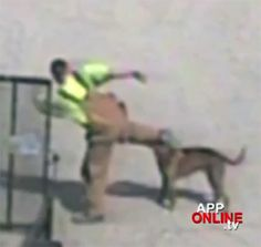 """In a fortuitous turn of events, a man caught on camera tormenting a dog was subjected to a taste of his own medicine when the abused animal turned on him."""