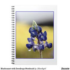 Bluebonnet with Dewdrops Notebook by Amy Steeples.  Available on Zazzle.