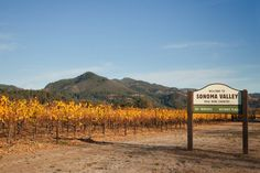Welcome to Sonoma Valley, Fall Vineyards at St Francis Winery