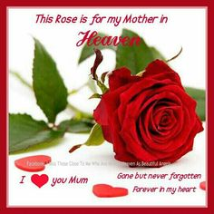 A Rose for my Mother in Heaven. I love and miss you
