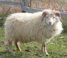 Fella as a lamb.