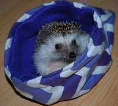 Many Patterns Small Pet Hedgehog Guinea Pig Snuggle Sleeping Bag Bed Glider Snuggle Sack Flannel Fleece Reversible Cute Cuddly Warm Cozy on Etsy, $9.00