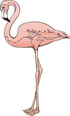 картинки фламинго рисованные