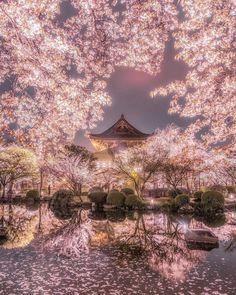 Es imposible cansarse de Japón y sus flores de cerezo  - Mi Mi Eli - Google+