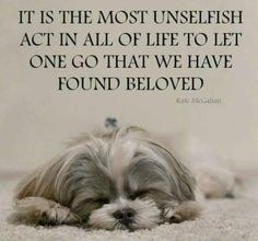 The traits we love about the Playfull Shih Tzu Pet Loss Grief, Loss Of Dog, I Love Dogs, Puppy Love, Pet Remembrance, Shih Tzu Dog, Shih Tzus, Loss Quotes, Dad Quotes