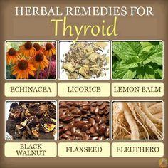 Thyroid natural remedies: Herbs for thyroid - Women Health Tips Natural Health Remedies, Natural Cures, Natural Healing, Herbal Remedies, Holistic Remedies, Thyroid Diet, Thyroid Health, Thyroid Disease, Thyroid Issues