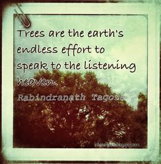 Trees are the earth's endless effort to speak to the listening heaven Cool Words, Wise Words, Tagore Quotes, Feelin Groovy, Tree Quotes, Serenity Now, Garden Yard Ideas, Bees Knees, Positive Words