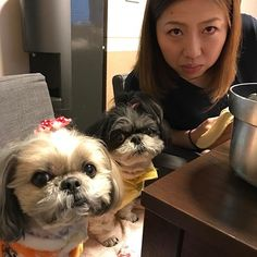 yunchan_0226 : まだ食べます‼️ by 三人娘。  #初顔出し。  #朝からモリモリ。  #本人の了解はもらってます。  #シーズー#愛犬#犬#いぬ#わんこ#きょうのわんこ#多頭飼い#シーズー大好き部#dogs#shihtzu