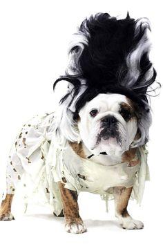 Dog Parade Costume