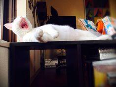 cat ダルダルルルル。。。 : ねこごち