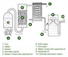 The steam distillation process Perfume, Distilling Alcohol, Essential Oil Distiller, Homemade Alcohol, Moonshine Still, Steam Distillation, Making Essential Oils, Pot Still, Diy Arts And Crafts