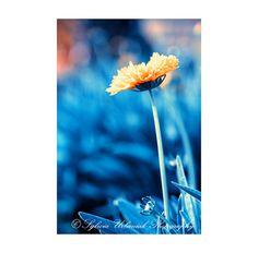 Macro Photography Flower Photography Nature by SeeWorldThruMyEyes, $8.00