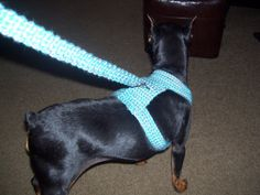 Crocheted Dog Harness