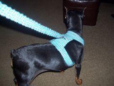 Crocheted Dog Harness