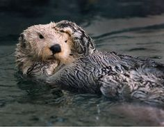 Exxon valdez oil spill damage per animal