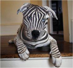 Zebra or Dog?