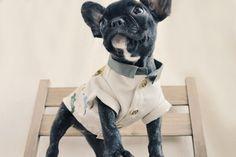 Ohpopdog's Season 02 Collection! —The Lazy Sunday I Oh! Basics Shirt / Safari Jungle