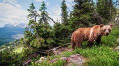 How a Photographer Captured Stunning Wildlife Photos