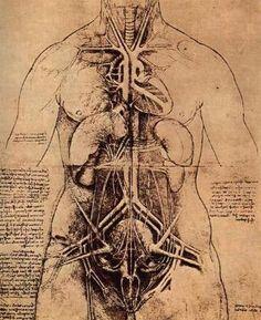 Anatomie der weiblichen Brust- und Bauchorgane, um 1508