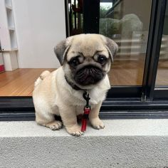 Cute Baby Pugs, Cute Dogs And Puppies, Doggies, Bulldogs, Types Of Puppies, Dogs For Sale, Dog Breeds, French Bulldog, Club